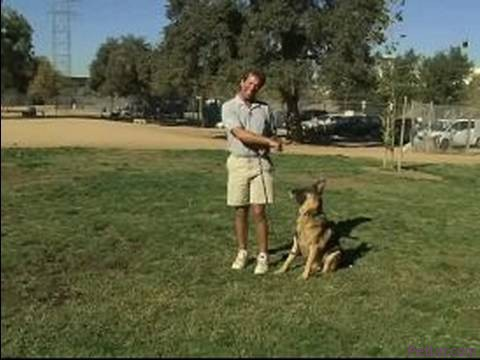 Basic Dog Training Tips : How to Walk a Dog