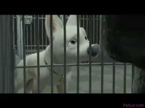 Bolt videoklipp – animal rescue