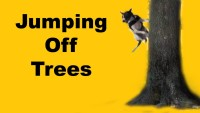 Bouncing off trees- clicker dog training