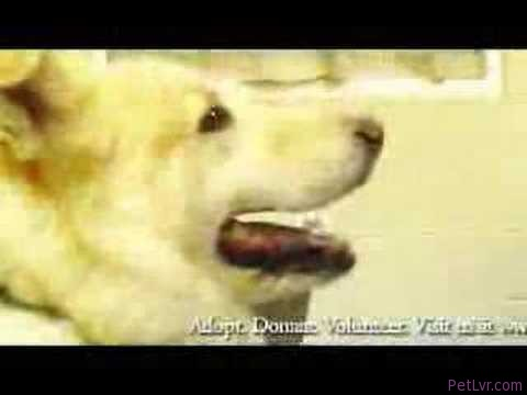 Buddy Adoption Commercial