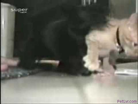 Cat Doesn't Let Dog Eat! Funny Animal Pet Video