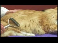 Cat Health Care Tips : How to Treat a Cat for Matted Fur
