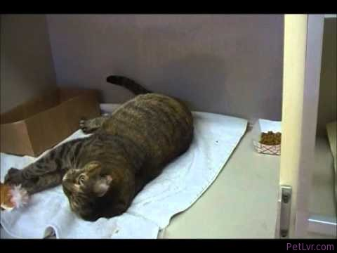 Cats at Pampered Pet Health Center Enjoying Catnip.wmv