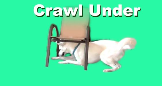 Clicker Dog Training- Crawl Under