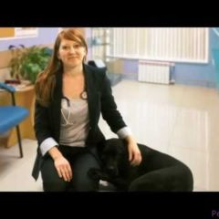 Considering pet health insurance for your dog or cat? Watch a vet discuss the benefits.