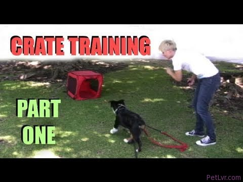 Crate Training- Part 1- Clicker dog Training