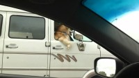 Cute Dog Funny Dog Riding In Passenger Seat
