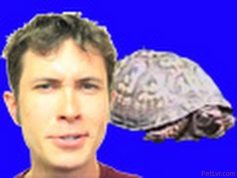 CuteWinFail, Ep. 33: Puppy vs. Turtle