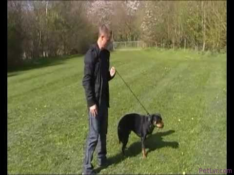 Darrens dog training tips pulling on lead