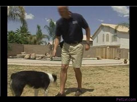 Dog Agility Training Basics : Teaching Dogs Agility Tricks