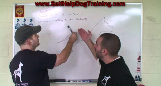 Dog Body Language – Analysis by the Dog Training Guys! (K9-1.com)