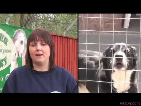 Dog, Cat, Rescue, Shelter and Adoption, The Mayflower Sanctuary Doncaster