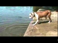 Dog Learns About Physics – Funny Video –