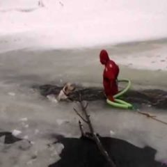 Dog rescue! Yellow lab in icy river!