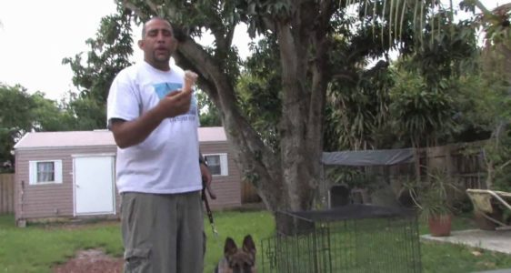Dog Training & Care : Crate Training Tips for a Puppy