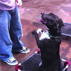 Dog Training Class – A quick pop quiz