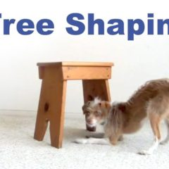 Dog Training- Crawl Under Free Shaping