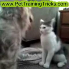 Dog Training – Dog Bodyslams Cat WWE Style!