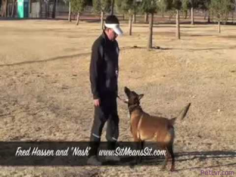 "Dog Training – Fred Hassen and ""Nash"""