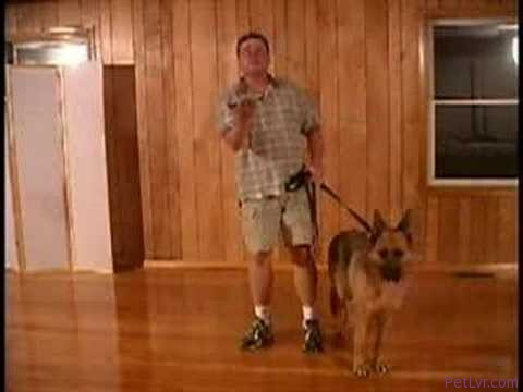 Dog Training Handsignals For Sit, Down, and Stand