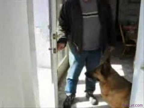 Dog Training – How to teach your dog to wait at the door