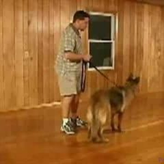 Dog Training – Sit, Down, and Stand Dog Training Commands