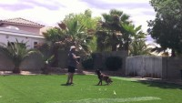 Dog Training – Stopping and starting energy