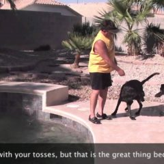 Dog Training – swimming pool toss