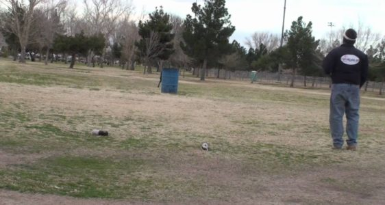 Dog Training – Teach your dog to jump over a trash can