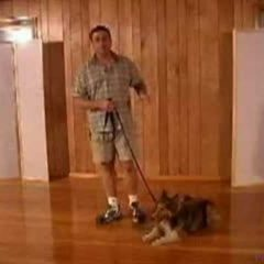 Dog Training – The Heel Command