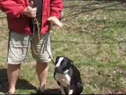 Dog Training – The Secret To Loose Leash Walking