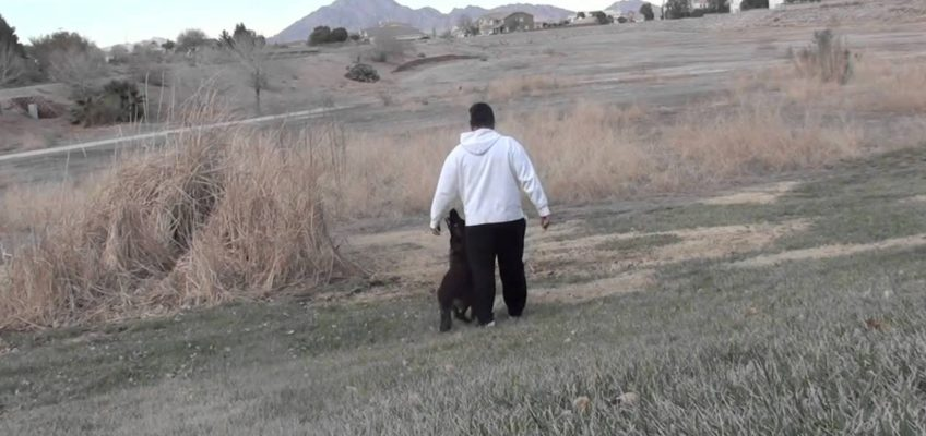 Dog Training – the 'Send Out' exercise.