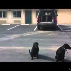 Dog Training Tip – Alternating Commands Helps Attention