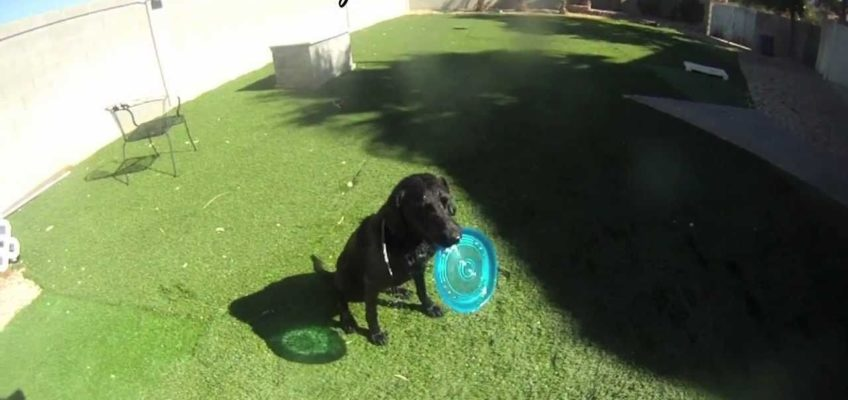 Dog Training tip – combine training and playing (Shot with HD Hero Gopro)