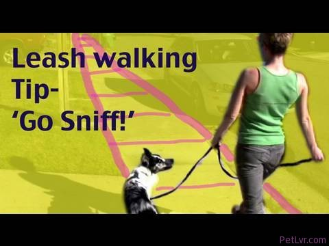 Dog Training Tip- Leash Walking: Go Sniff and Marking