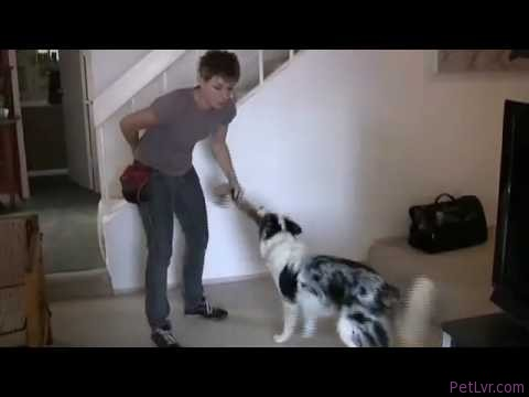 Dog Training Tip of the Day- Tugging with your dog