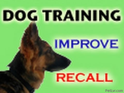 Dog Training Tips: Come When Called!