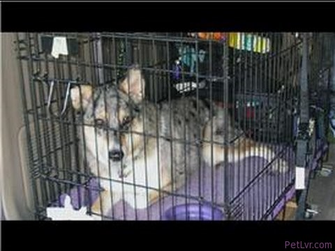 Dog Training Tips : Dog Crate Training