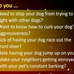 Dog training tips | Dog obedience training
