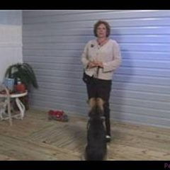 Dog Training Tips : Dog Training: Preventing Jumping