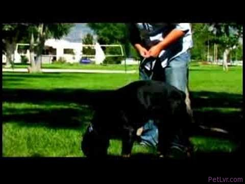 Dog Training Tips : How to Scent-Train Your Dog