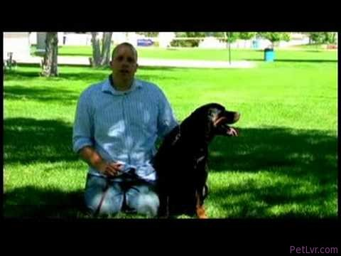 Dog Training Tips : How to Train a Dog Not to Bite