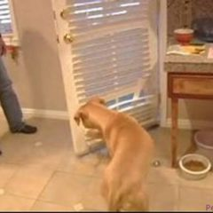 Dog Training Tips : How to Train a Dog to Close a Door