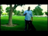 Dog Training Tips : How to Train an Attack Dog