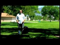 Dog Training Tips : How to Train a Dog Not to Bark at Visitors
