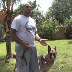Dog Training Tips : How to Train a Dog to Poop in the Same Place