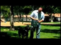 Dog Training Tips : How to Train a Dog to Fetch a Newspaper
