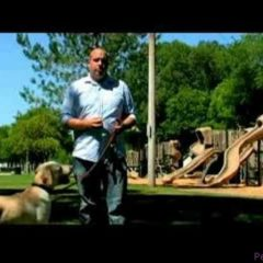 Dog Training Tips : How to Train a Drug Dog