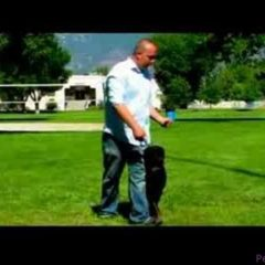 Dog Training Tips : How to Train Your Dog to Come Back When Called