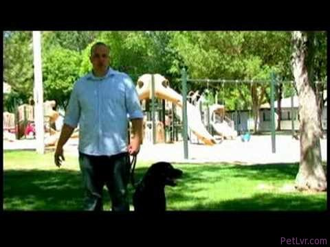 Dog Training Tips : How to Train Your Dog to Pull Carts